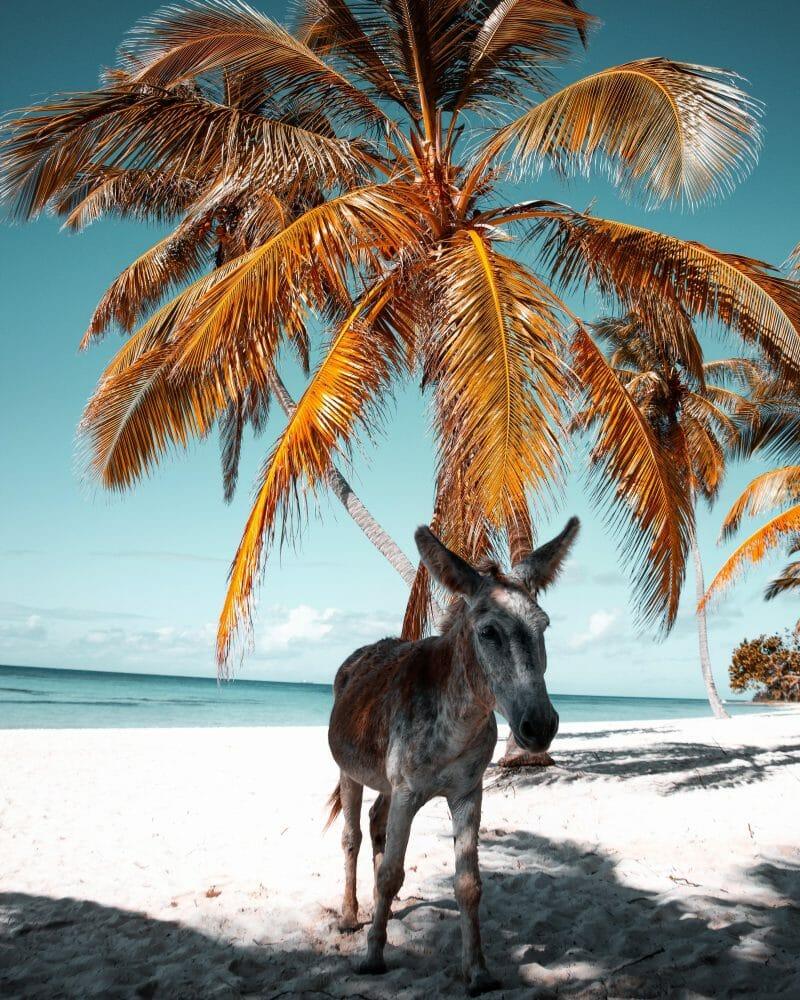 Dominikaaninen Tasavalta Lennot